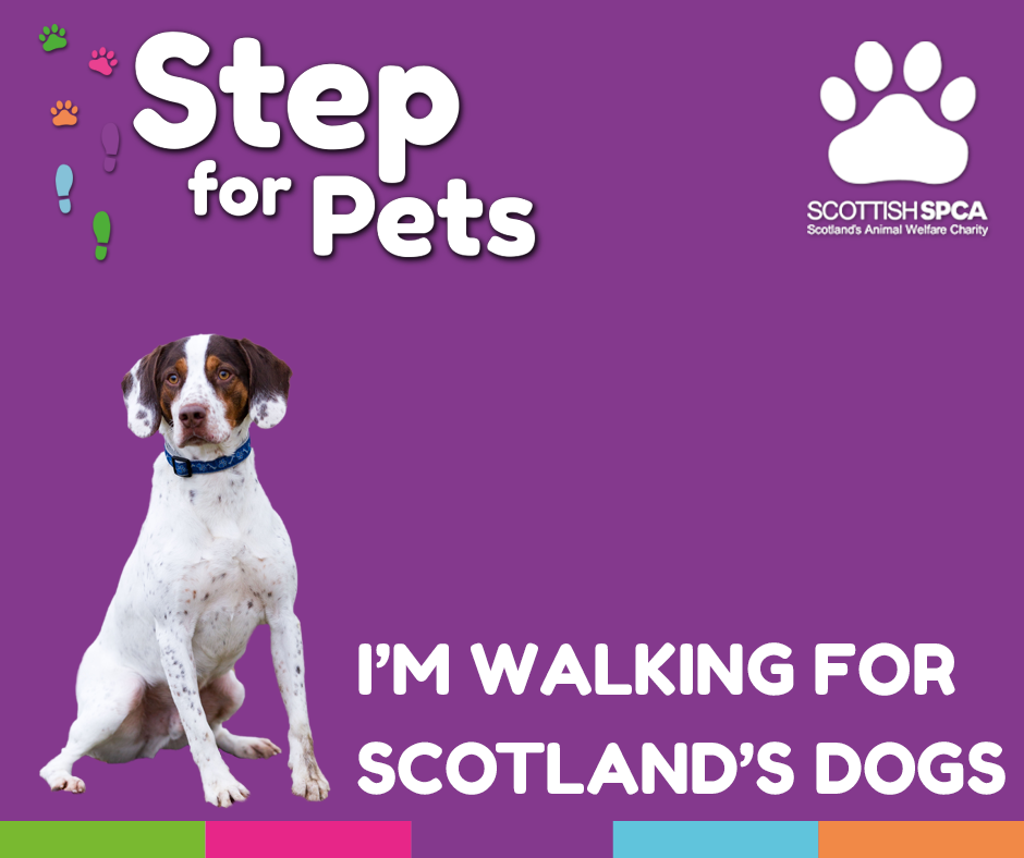 Step for Pets - Dogs