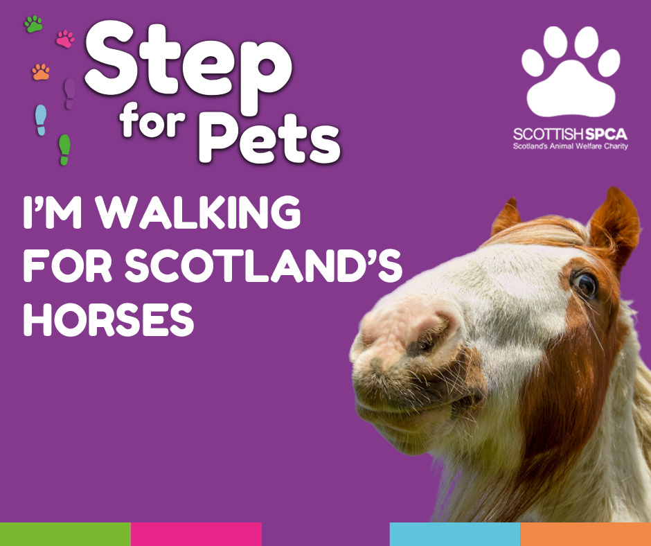 Step for Pets - Horses