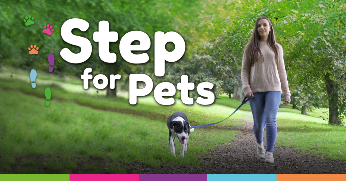Step for Pets